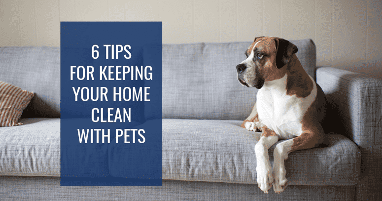 6 Tips For Keeping Your Home Clean With Pets Princeton